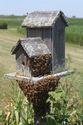 Cabarrus County Beekeepers